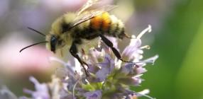 8935-Bee