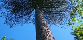 8218-Tree
